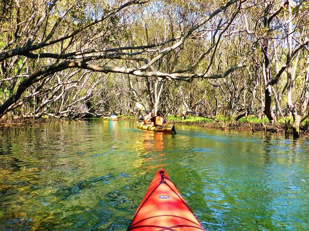 Kayaking through a creek at Sydney Harbour Kayaks
