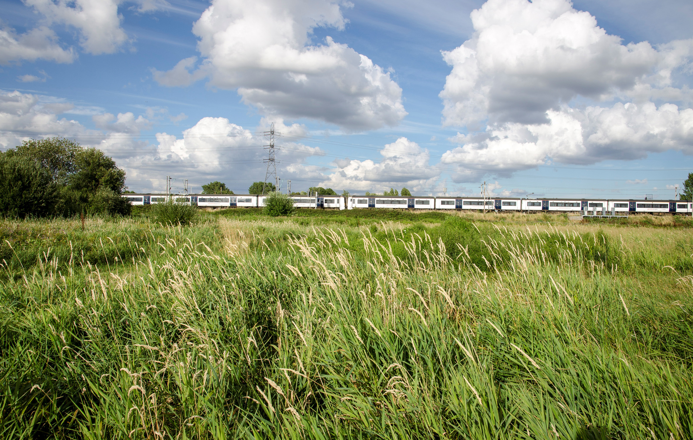 Explore: Walthamstow Marshes