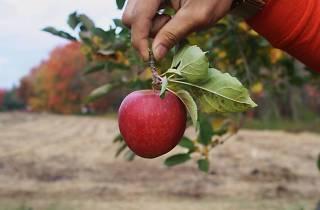 Styer Orchard