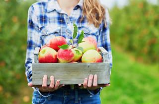 apple picking near philadelphia