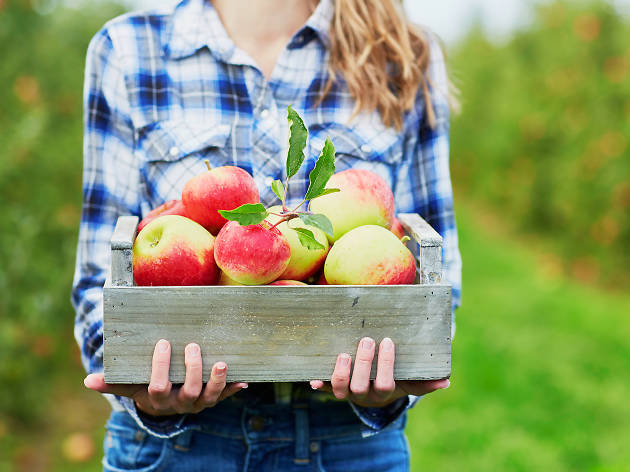 Where to go apple picking near Philadelphia
