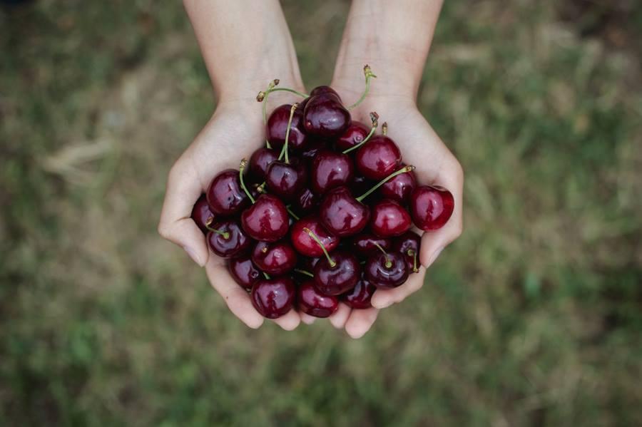CherryHill Orchards