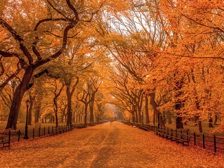 The best fall foliage in New York