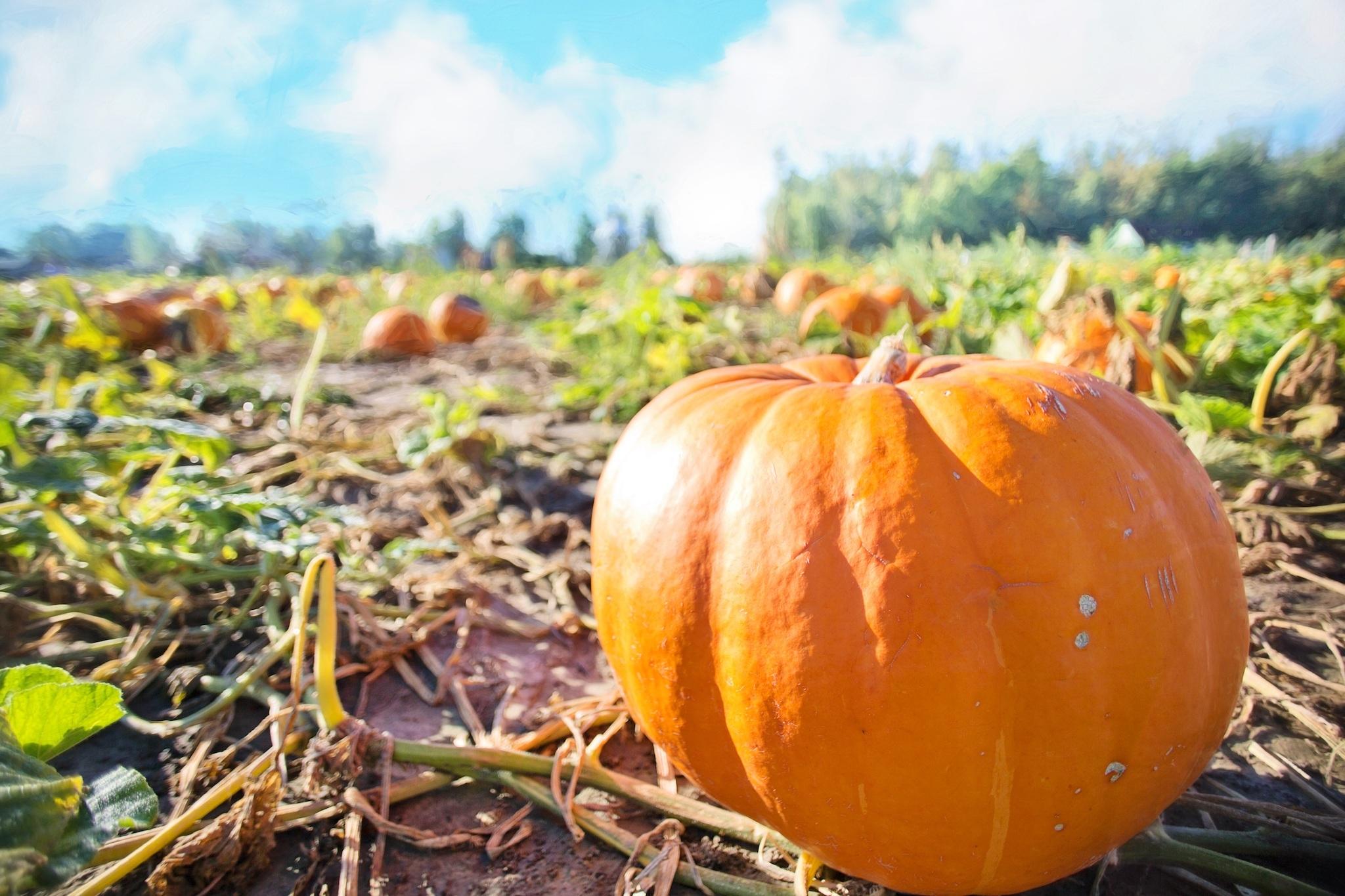 8 best pumpkin patches near philadelphia