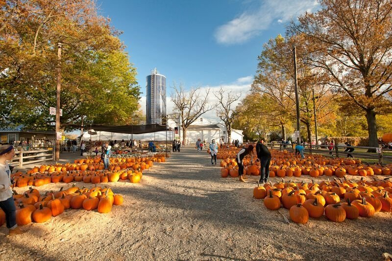 A guide to pumpkin patches near Philly