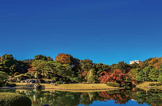 Autumn leaves in Tokyo | Time Out Tokyo