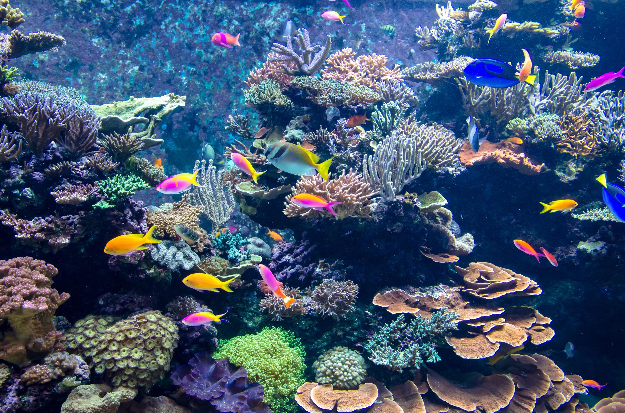 ish Tank, Aquarium, Scenics, Transparent, Multi Colored, Below, Panoramic, Underwater, Singapore, Plant, Coral, Fish, Animal, Sunbeam, Light - Natural Phenomenon, Bubble, Rock - Object, Reef, Landscape, Sea, Water, underwaterworld