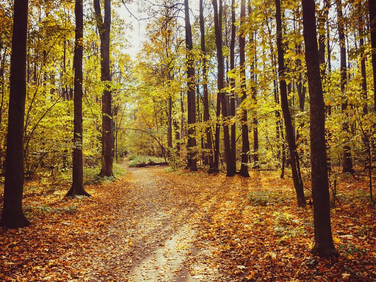 Los bosques más bonitos