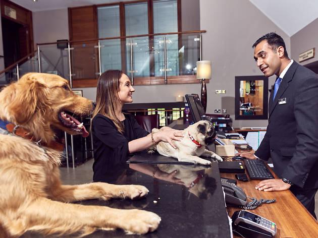 Dog-friendly hotels: Mercure Walton Hall Hotel & Spa