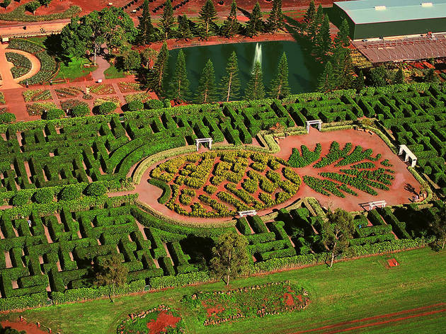 Dole Plantation Pineapple Maze