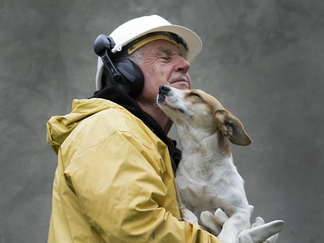 Mascotas sismo