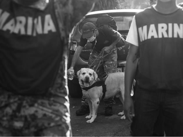 Rescatando en cuatro patas: los perros brigadistas que apoyaron en el sismo de la CDMX