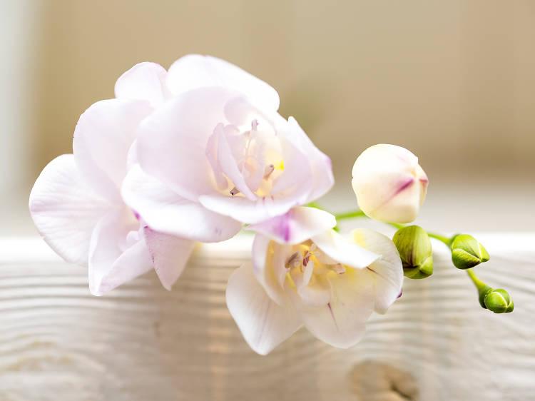 Rapid Flore