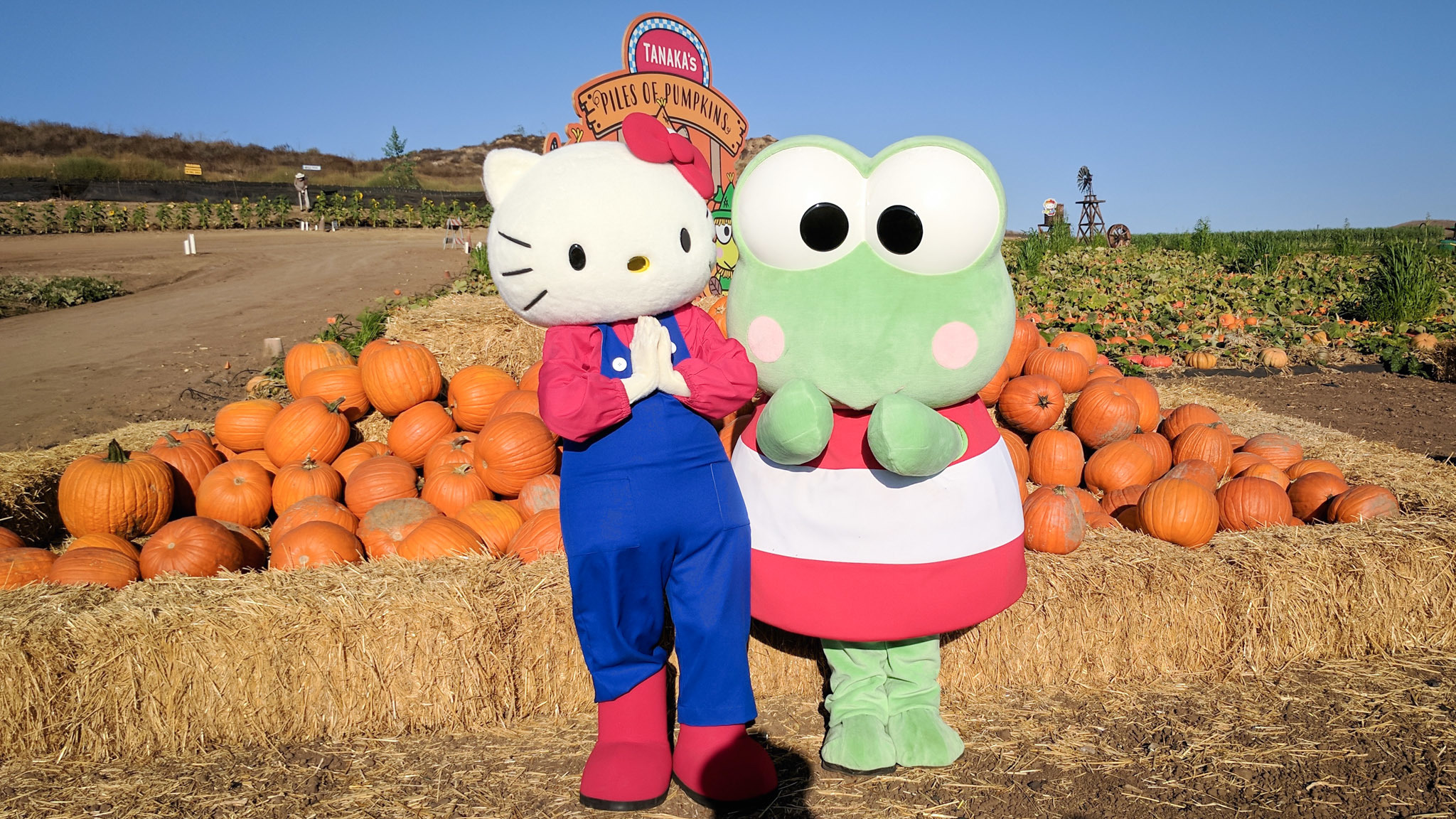 Take a tour of the adorable Hello Kitty pumpkin patch in Irvine