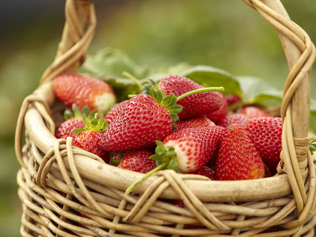 Sunny Ridge Strawberry Farm