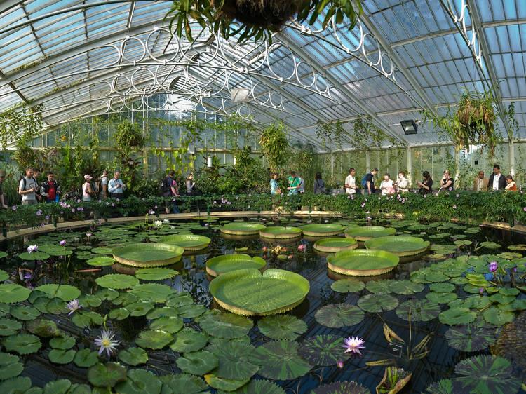 Célébrez les saisons à Kew Gardens