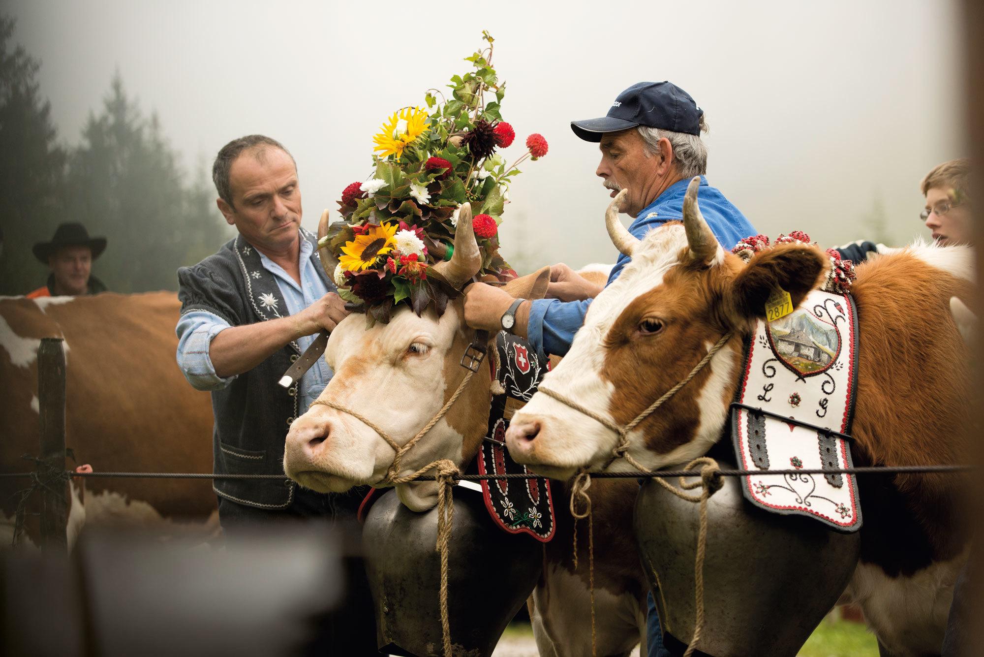 Dress a cow - Bucket List
