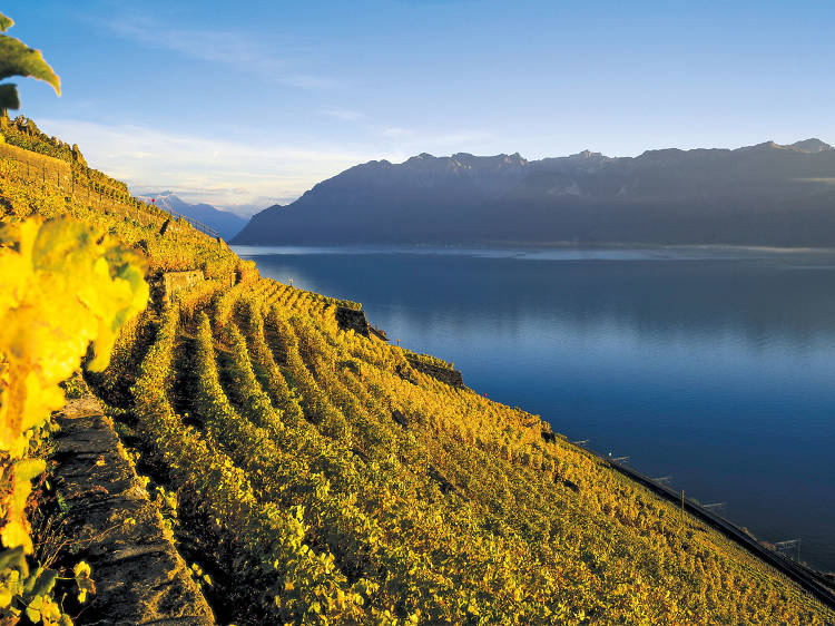 Sample fine wines among the vineyards