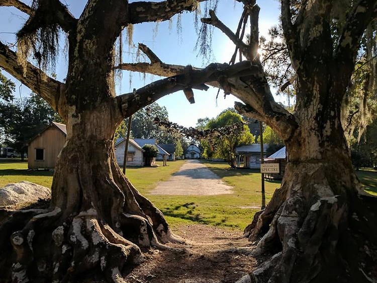 Tim Burton set ruins | Jackson Lake Island, AL