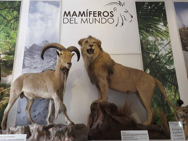 (Foto: Carmen García)