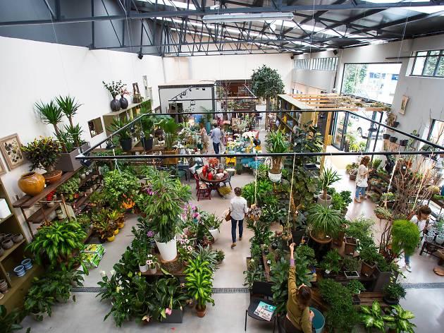 As melhores lojas para comprar plantas no Porto