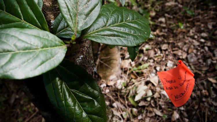 Espaço Biodiversidade