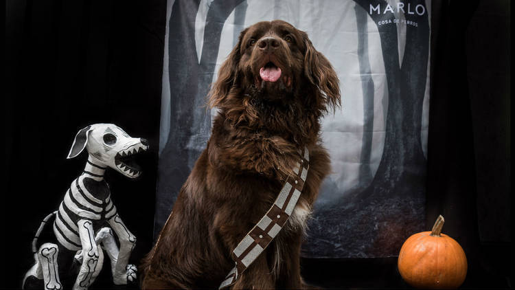 Los mejores disfraces de Halloween para tu mascota
