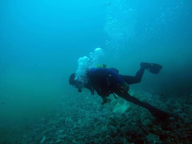 Vanas Dive