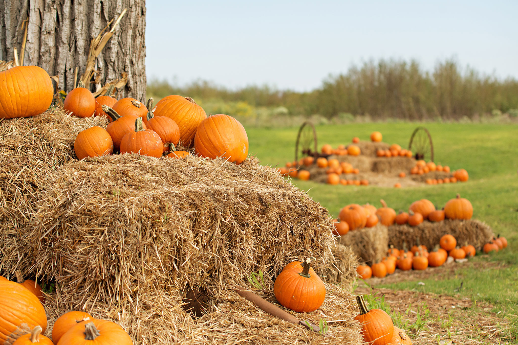 The best pumpkin patches in Austin