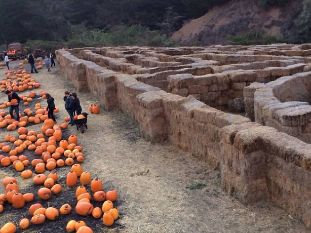 Fun pumpkin patches near the Bay Area