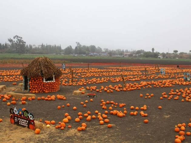J.E. Perry Farms Pumpkin Patch