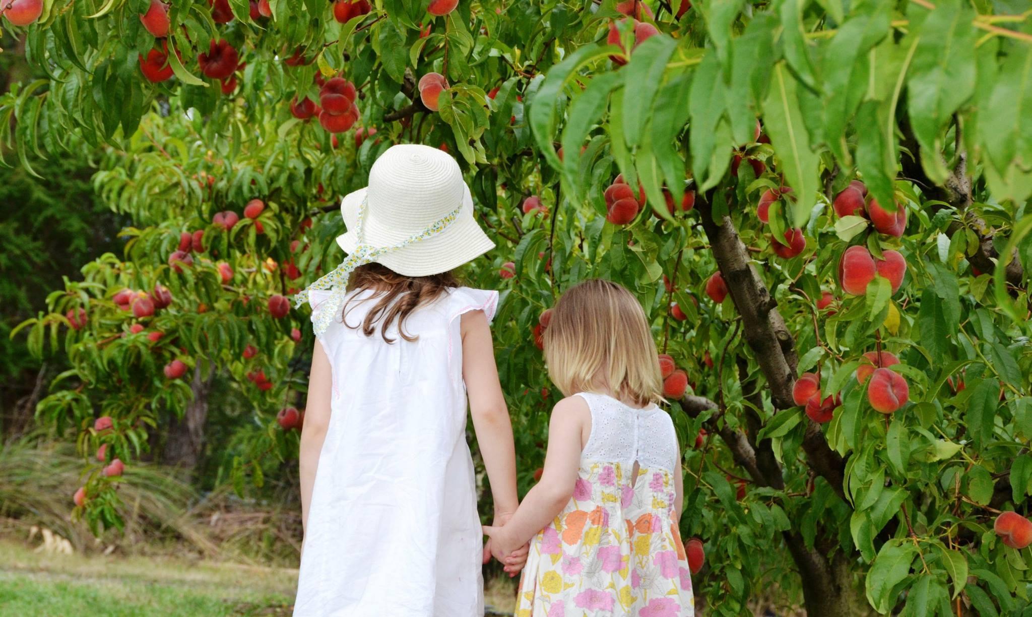 Raynard's Orchard