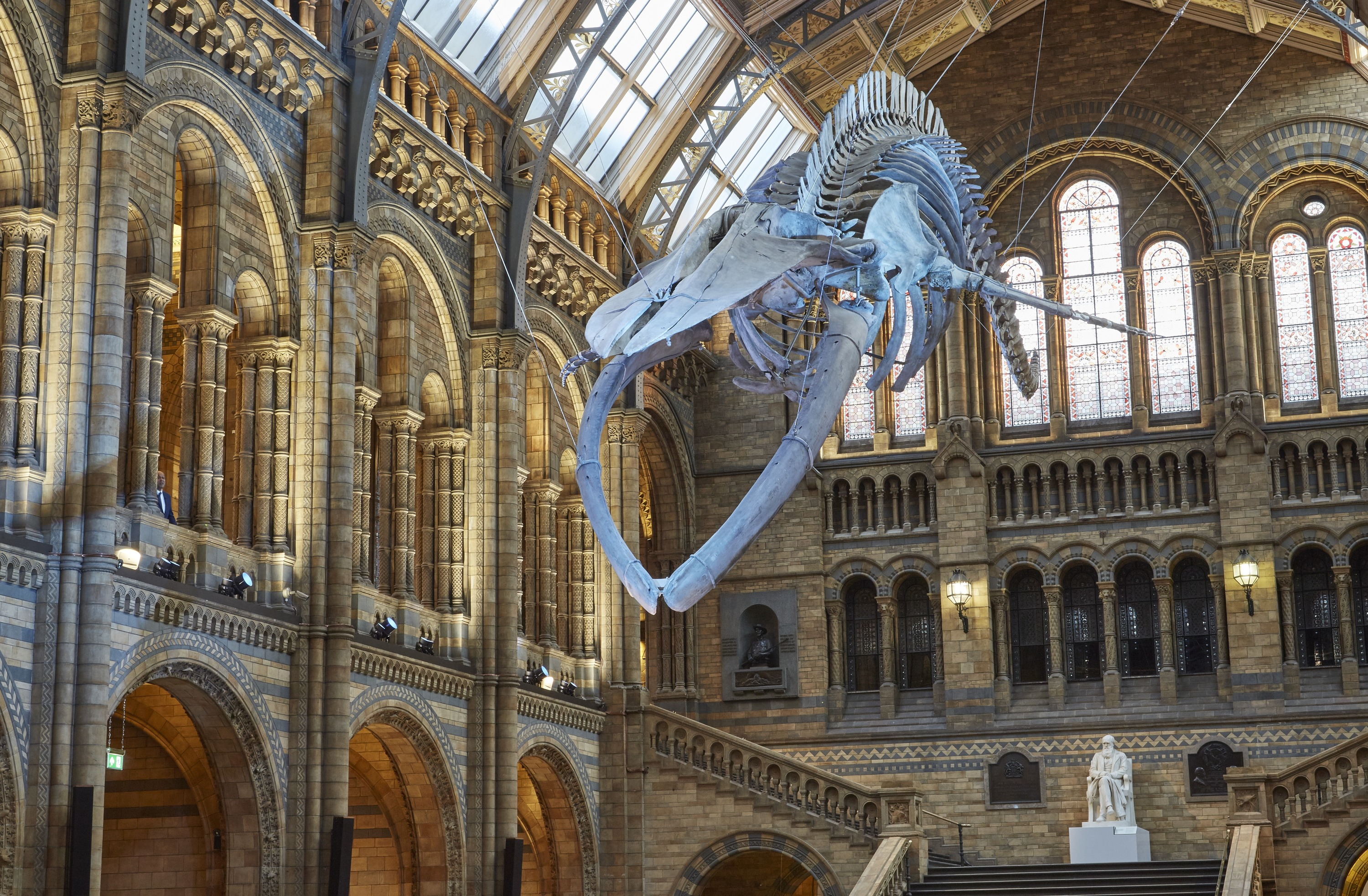 Meet the whale at the Natural History Museum