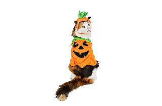Talleres de Halloween y Día de Muertos en Catfecito
