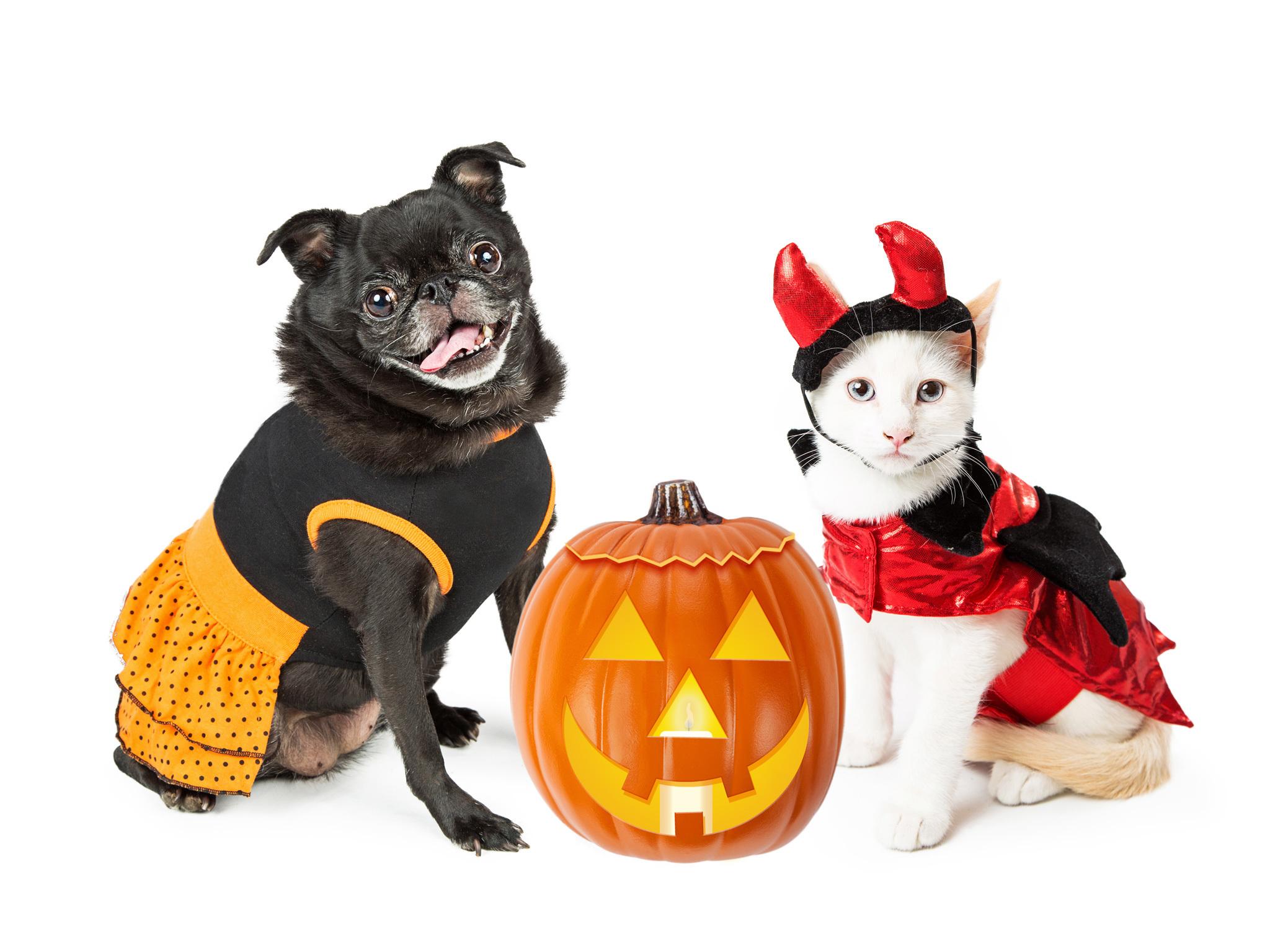 Eventos de Halloween para tu mascota