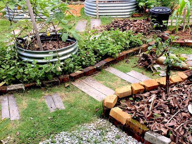 Eats, Shoots & Roots urban farming