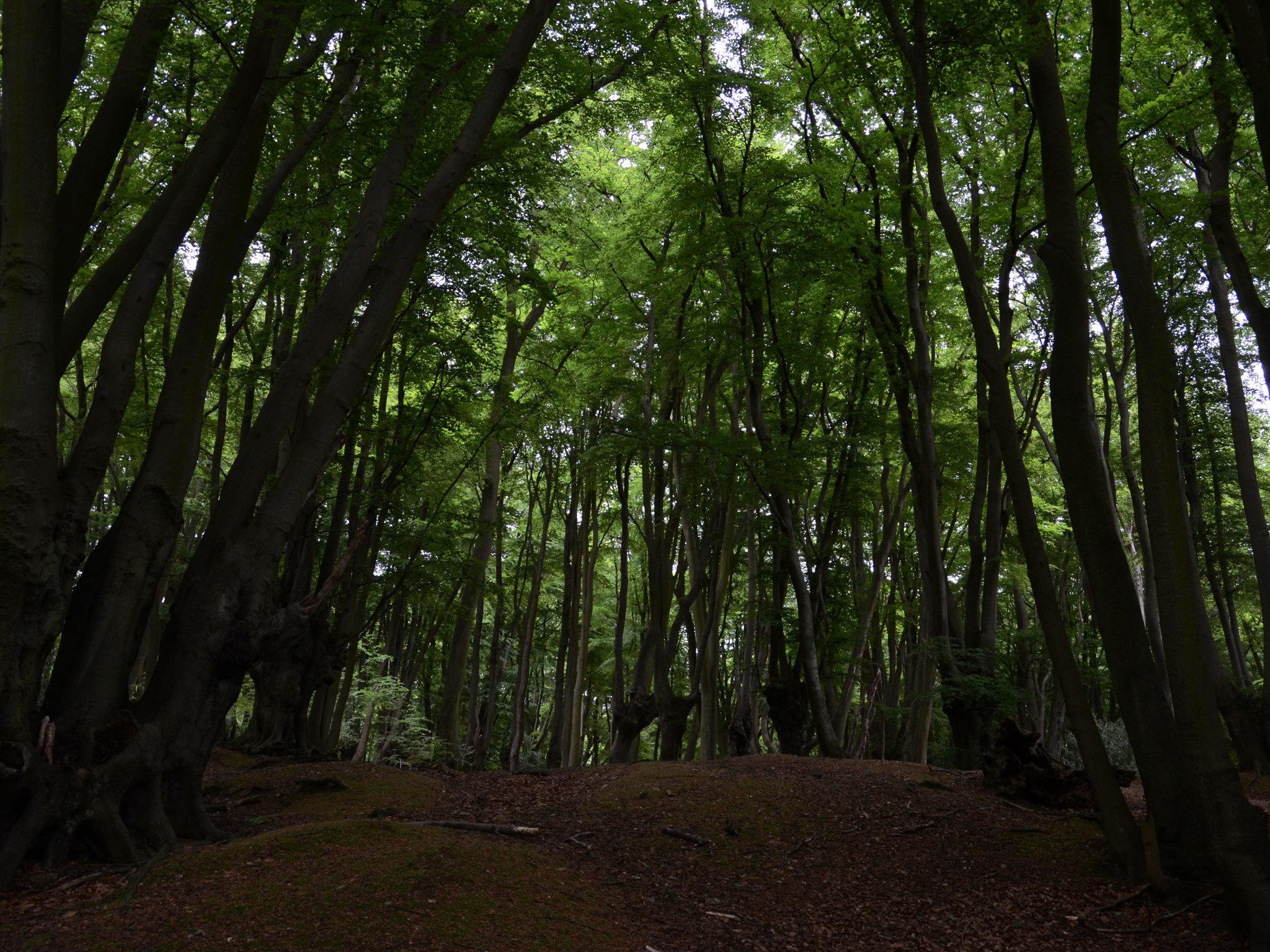 dead forest horror free как пройти место с шоссе