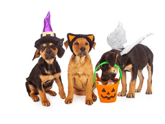 Postres de Halloween y pan de muerto para perros
