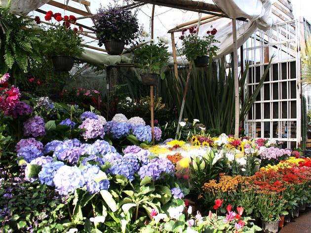 Mercado de flores y plantas (Foto: Laura Celis)