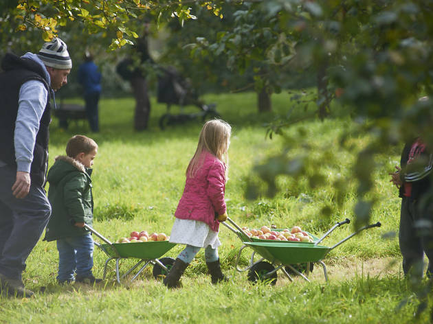 Apple collecting Glastonbury - autumn day trips for kids