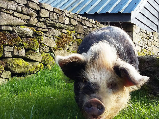 Piggy walk Brecon Beacons - autumn day trips for kids