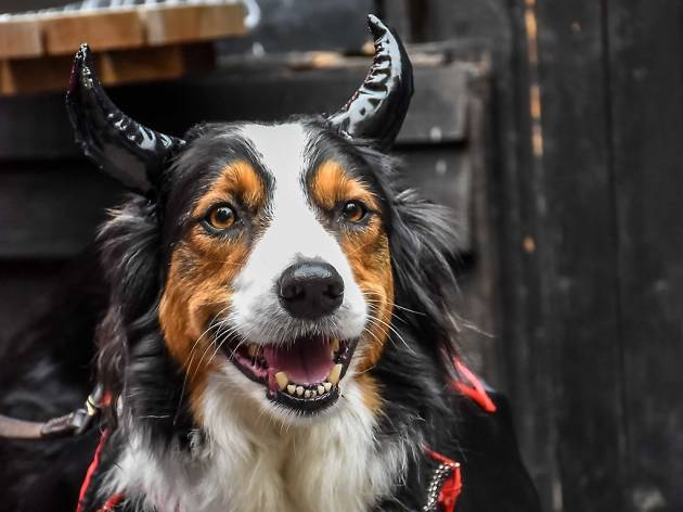 Take your hellhound for walkies