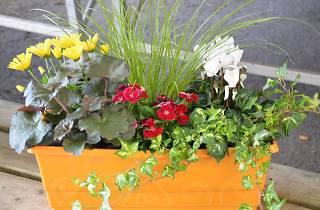 Generic flower pot