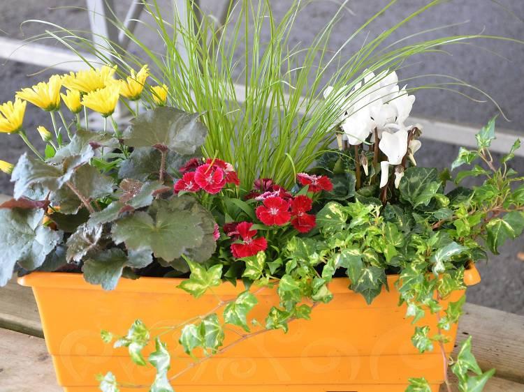 Butterfly Blooms Garden Centre