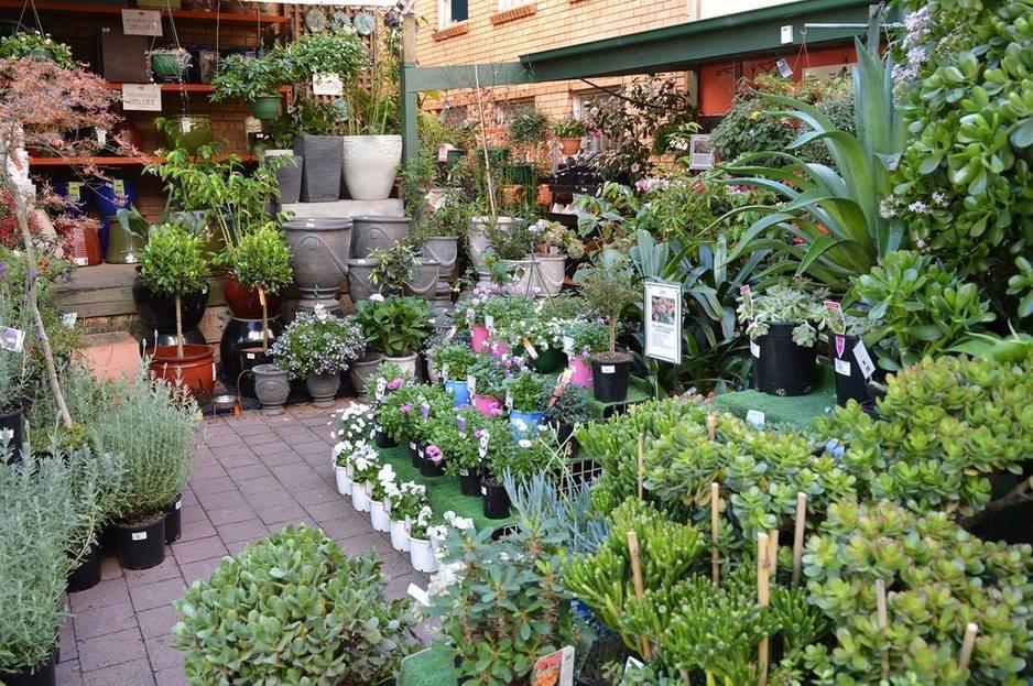 Honeysuckle Garden
