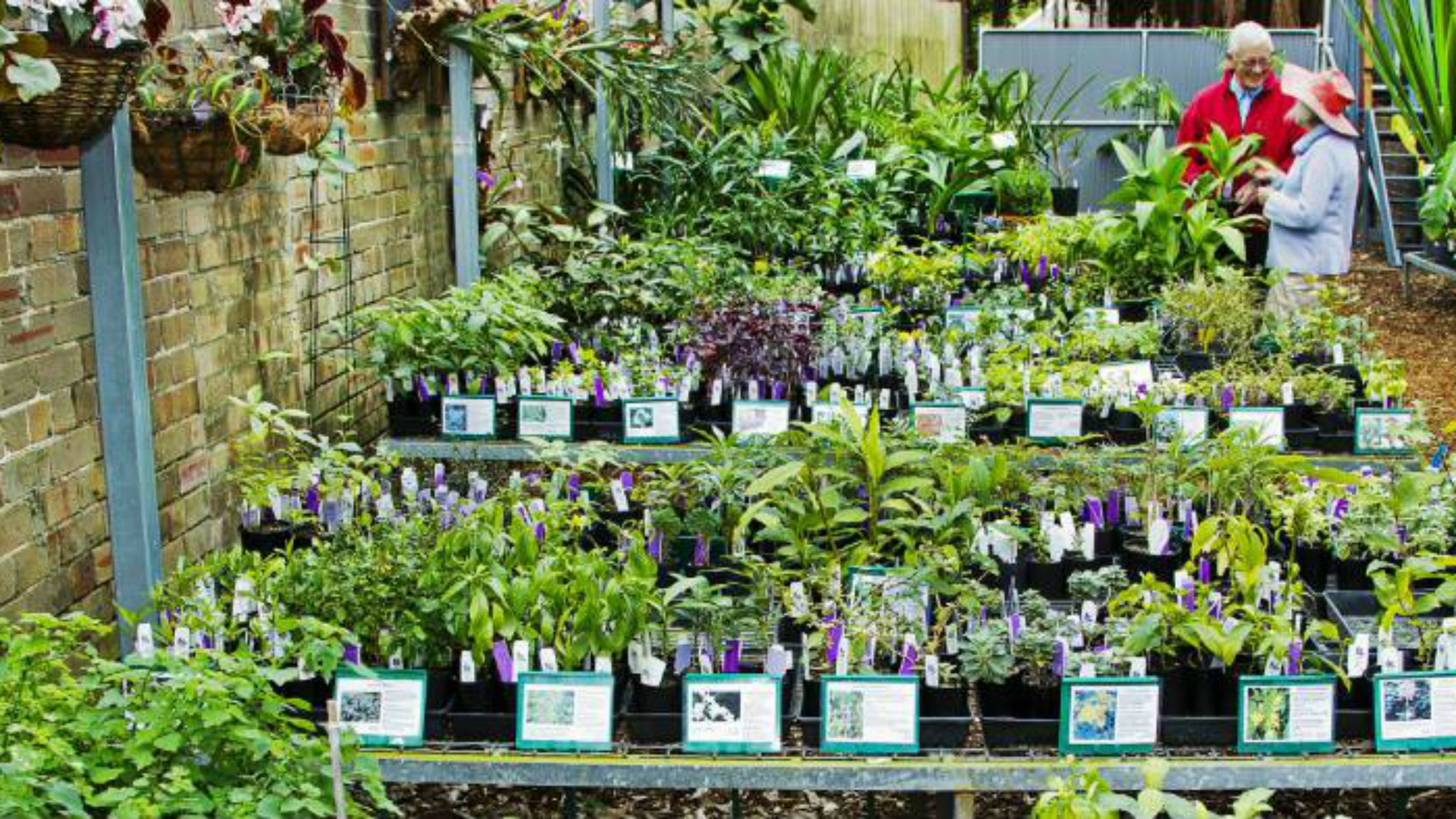 Sydney S 12 Best Plant Nurseries