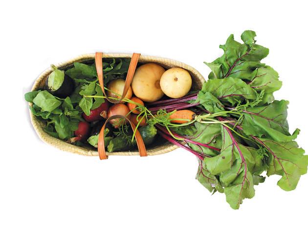 Legumes Vasco Pinto