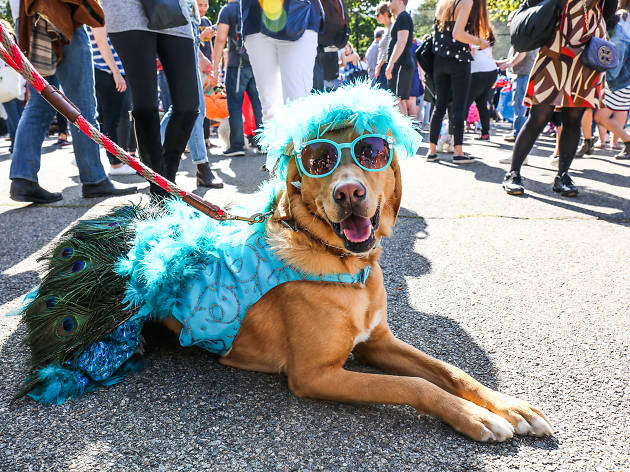 The most adorable costumes at the Tompkins Square Park Halloween Dog Parade