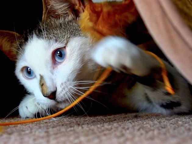Cat Videos Live!