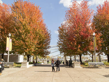 20 Best Places to See Fall Foliage in Chicago in 2019